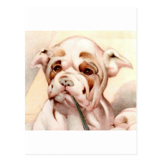 Baby Bull-Dog - SUPER CUTE ! Post Card