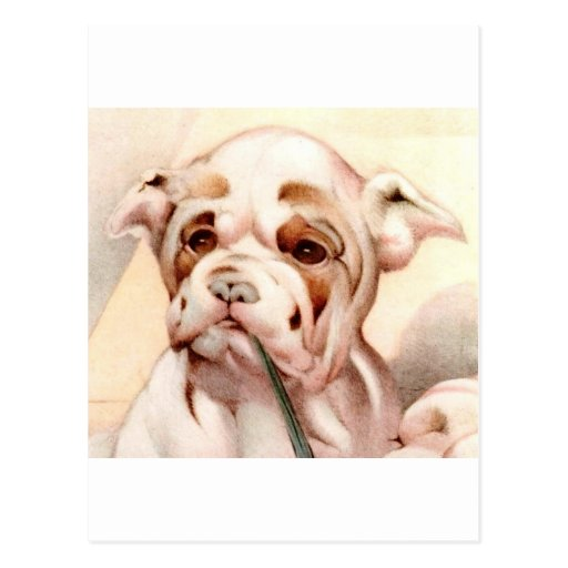 Baby Bull-Dog - SUPER CUTE ! Post Card