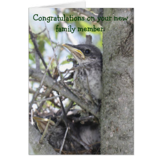 Baby Congratulations New Baby in the Nest Card