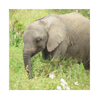 Baby Elephant Canvas Prints