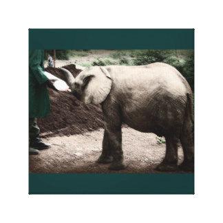 Baby Elephant - Kenya Canvas Print