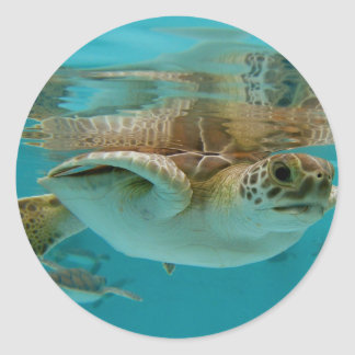 Baby Green Sea Turtle Stickers
