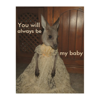 baby kangaroo baby poster wood canvas