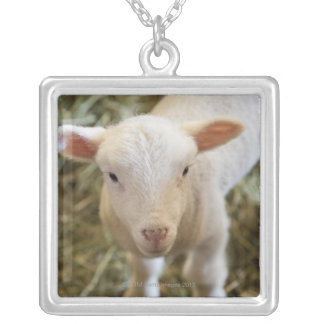 Baby Lamb Silver Plated Necklace