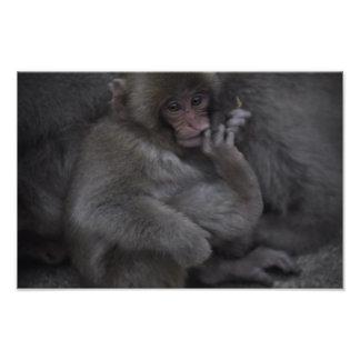 Baby Macaque, Macaco Bebe Photo Print