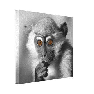Baby Mangabey Monkey Canvas Print