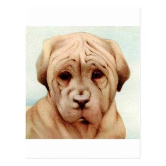 Baby Mastiff - SUPER CUTE ! Postcard