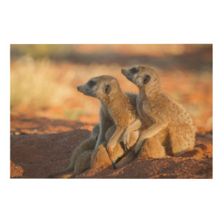 Baby Meerkats Hide Under Their Parents Wood Wall Decor