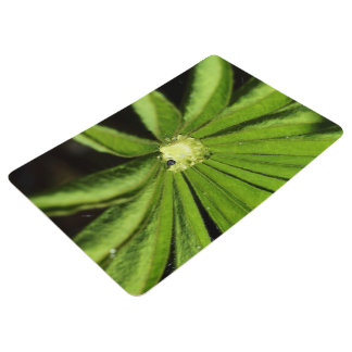Baby Palm Plant by Shirley Taylor Floor Mat