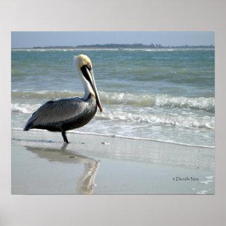 Baby Pelican Poster