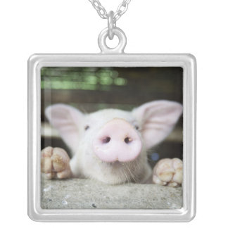 Baby Pig in Pen, Piglet Silver Plated Necklace