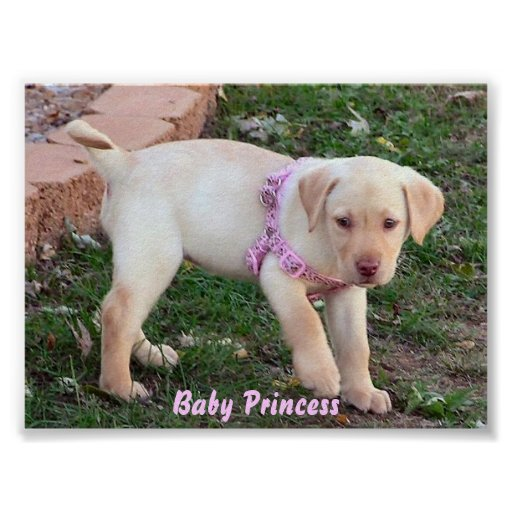 Baby Princess Posters