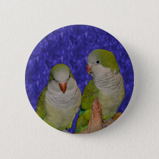 Baby Quaker Parrot Pair Animal Button