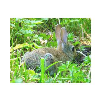 Baby Rabbit Canvas Print