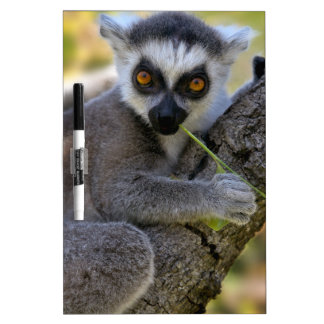 Baby Ring Tailed Lemur Dry-Erase Boards