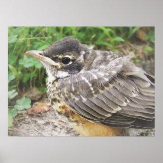 Baby Robin Print
