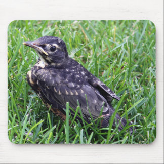 Baby Robin Sitting in the Grass Photo Mouse Pad