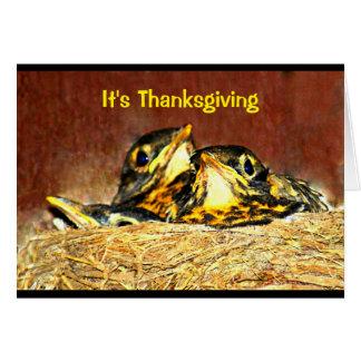 Baby Robins Thanksgiving Humor Card