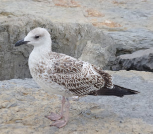 Baby Seagull Gifts on Zazzle NZ