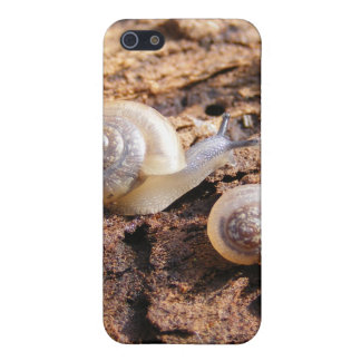 Baby Snails iPhone 5/5S Cases