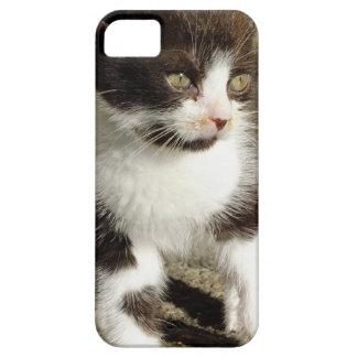 Baby Tuxedo Kitten - Cat iPhone 5 Case