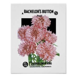 Bachelor's Buttons Seed Packet Label Poster