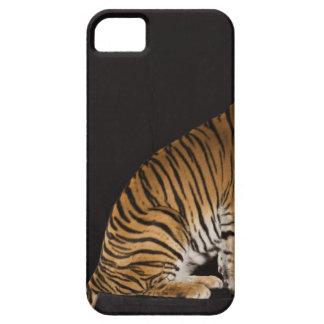 Back end of tiger sitting on platform iPhone 5 case
