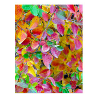 Background of vivid red and green autumn leaves postcard