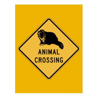 Badger Crossing, Traffic Warning Sign, Wyoming, US Postcard