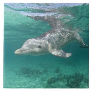 Bahamas, Grand Bahama Island, Freeport, Captive 5 Tile