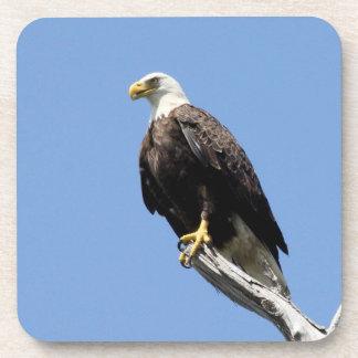 Bald Eagle Coaster