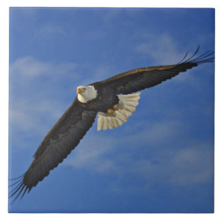 Bald Eagle in flight, Haliaetus leucocephalus, Tile