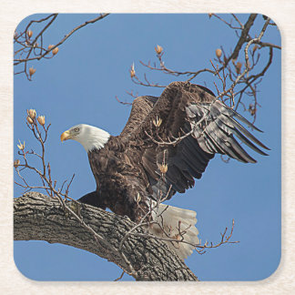 Bald Eagle on a tree branch Square Paper Coaster