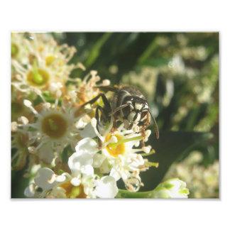 Bald-faced Hornet Print Photo Art