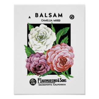 Balsam Seed Packet Label Poster