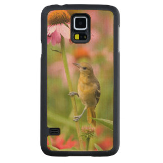 Baltimore Oriole Carved Maple Galaxy S5 Case