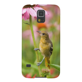 Baltimore Oriole Cases For Galaxy S5