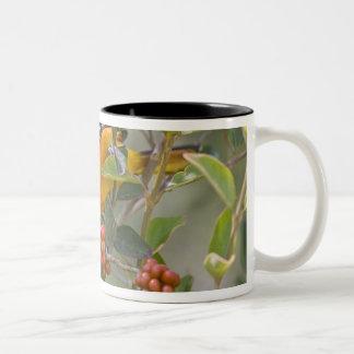 Baltimore Oriole Icterus galbula) adult male Two-Tone Coffee Mug