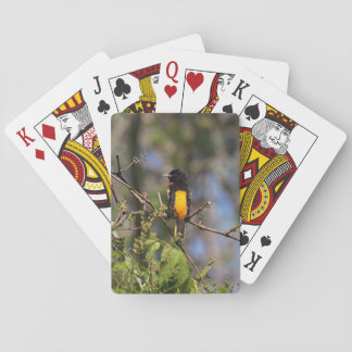 Baltimore Oriole in the Spring Playing Cards