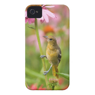 Baltimore Oriole iPhone 4 Cover