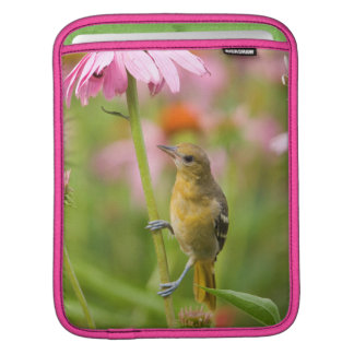 Baltimore Oriole Sleeves For iPads