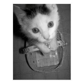 bambam kitty postcard