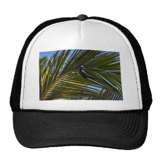BANANA BIRD RURAL QUEENSLAND AUSTRALIA CAP