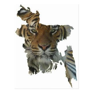 Bangladesh tiger postcard