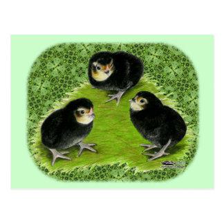 Bantam Chicks in the Garden Postcard