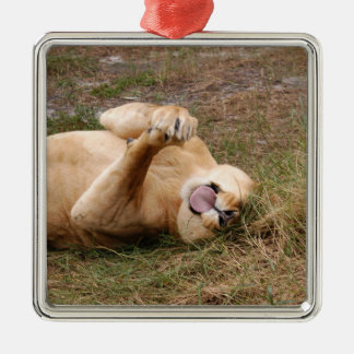 Barbary Lion Christmas Ornament
