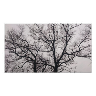 Bare Trees in High Park Poster