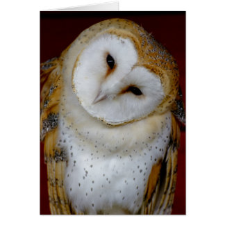 barn owl any occasion note or greeting card