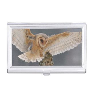 Barn owl landing to spike business card holder