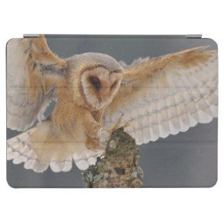 Barn owl landing to spike iPad air cover